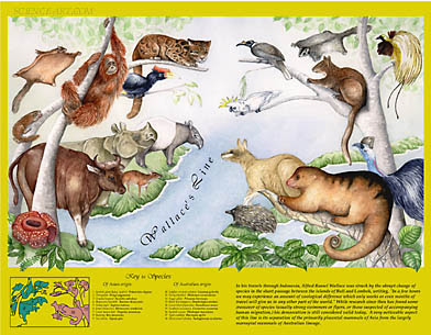 picture of animals on either side of wallace line
